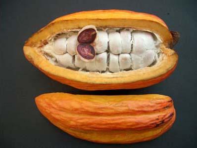 cacoyer-fruit