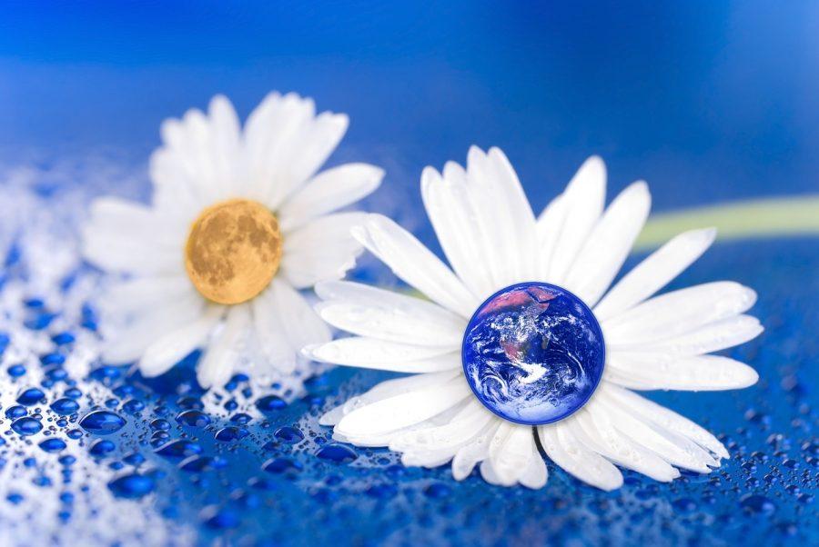 terre-fleurs