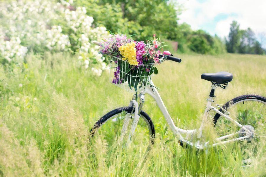 Vélo avec un panier de fleurs dans un pré