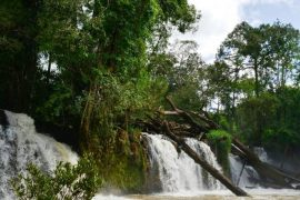 La jungle Mondulkiri au Cambodge